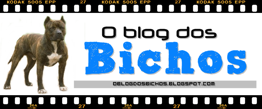 O Blog dos Bichos