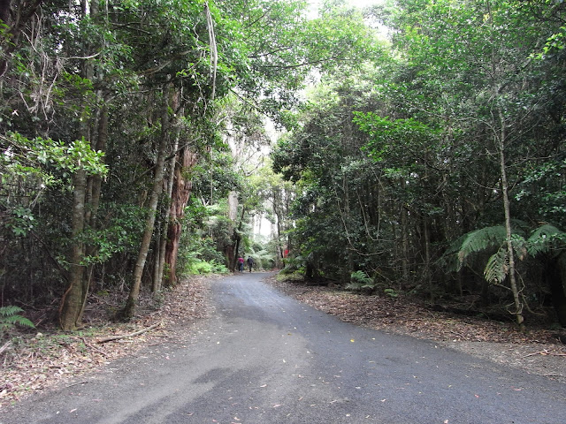 Path to Illawarra Fly Treetop Walk