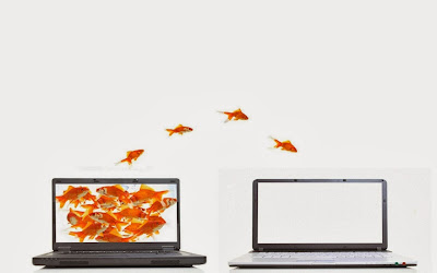 Jumping goldfish laptops white background wallpaper