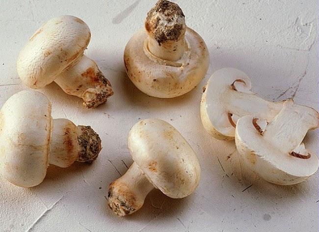 les jardins du laveu essais d 39 une culture de champignons de paris. Black Bedroom Furniture Sets. Home Design Ideas