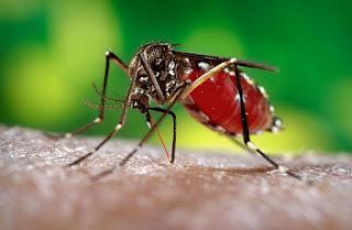 Waspada virus zika menyerang ! terapkan 4 hal ini untuk melindungi keluarga kita