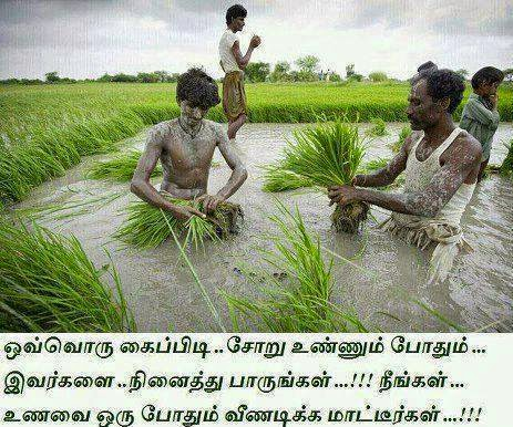 Best Tamil Quote about Farmer : Tamil Quote Photos