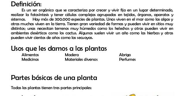 Plantas de jardin informacion sobre plantas - Todo sobre las plantas ...