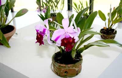 Tipos de Orquídeas Raras