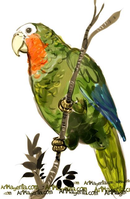 Cuban Amazon sketch painting. Bird art drawing by illustrator Artmagenta