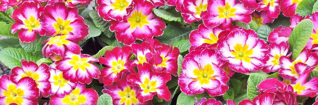 Aleja Kwiatowa - blog ogrodowy, dekoracje do domu i ogrodu