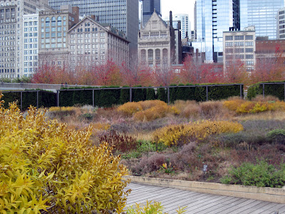 Lurie Garden in fall with amsonia