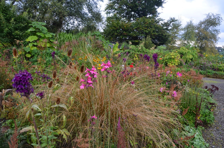 Noel\'s Garden Blog: Ireland - gardening climate and culture