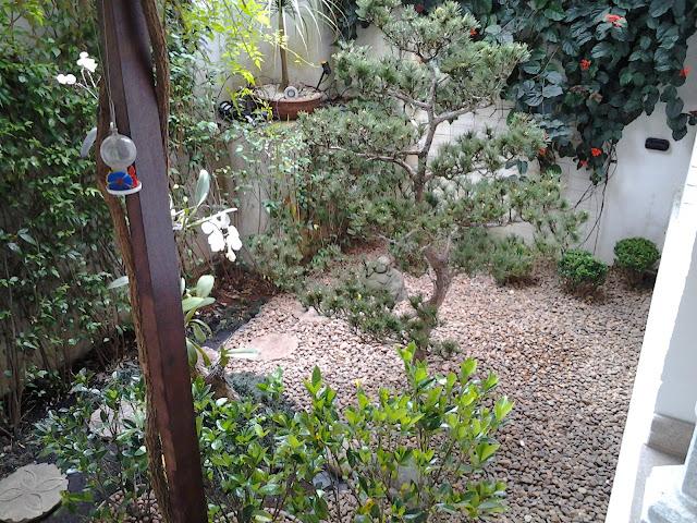 pinheiro negro, jardinagem