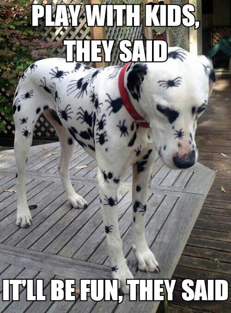 Das Bild des Tages : Der Dalmatiner im Spinnen-Look