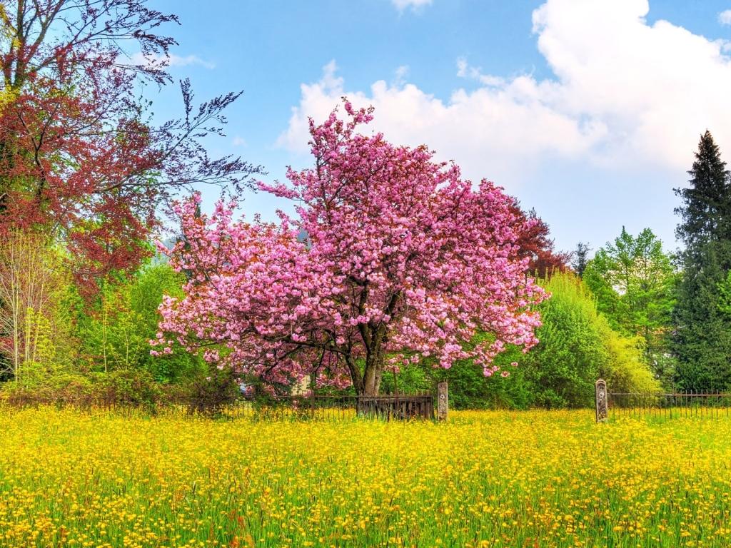 free spring wallpaper