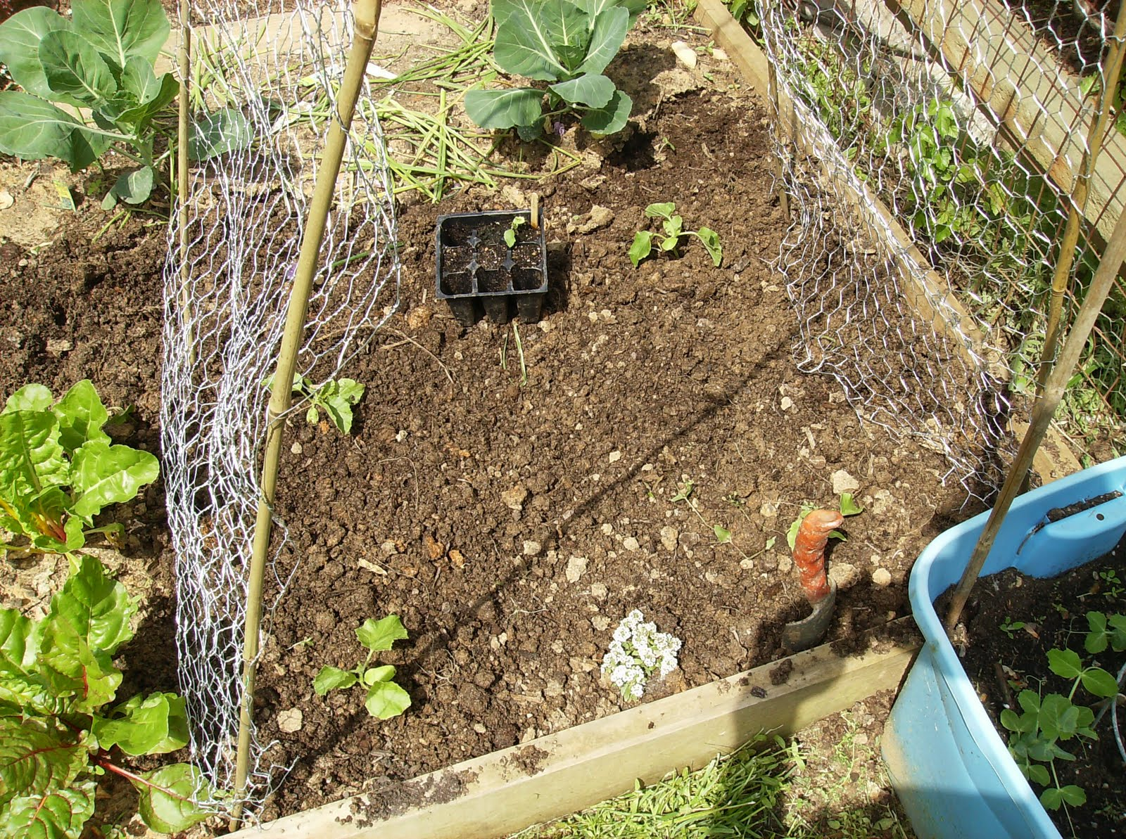 Building a low cost vegetable garden trellis in pictures for How to build a vegetable garden