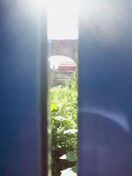 Mi jardín secreto