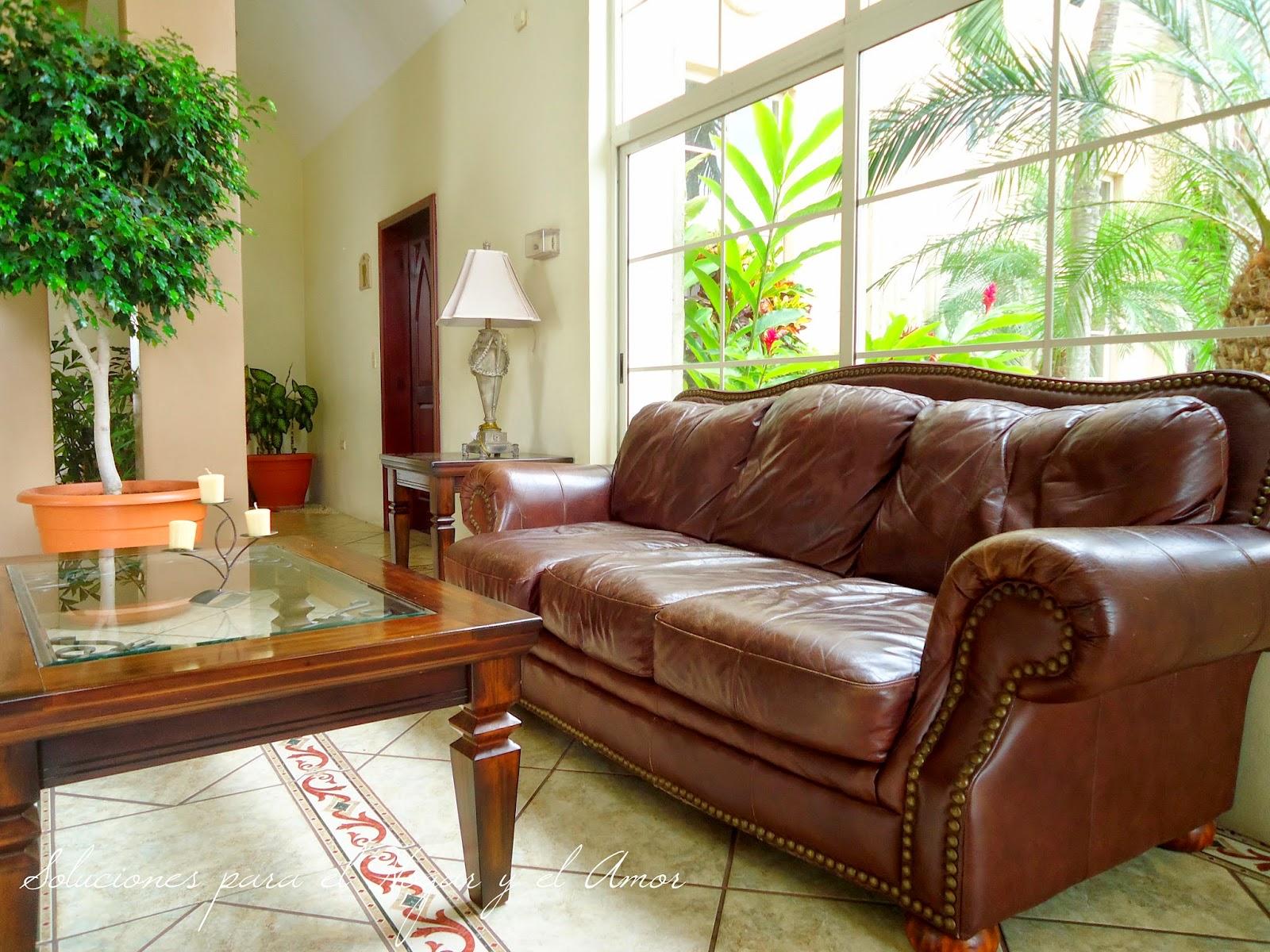 sofá de cuero, mesa de madera con tope de vidrio, plantas, sala