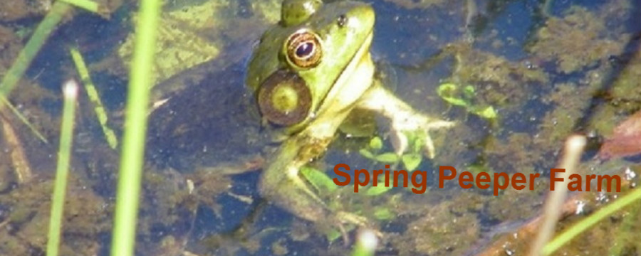 Spring Peeper Farm