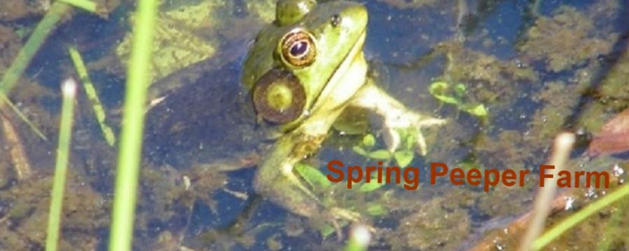 Spring Peeper Farm