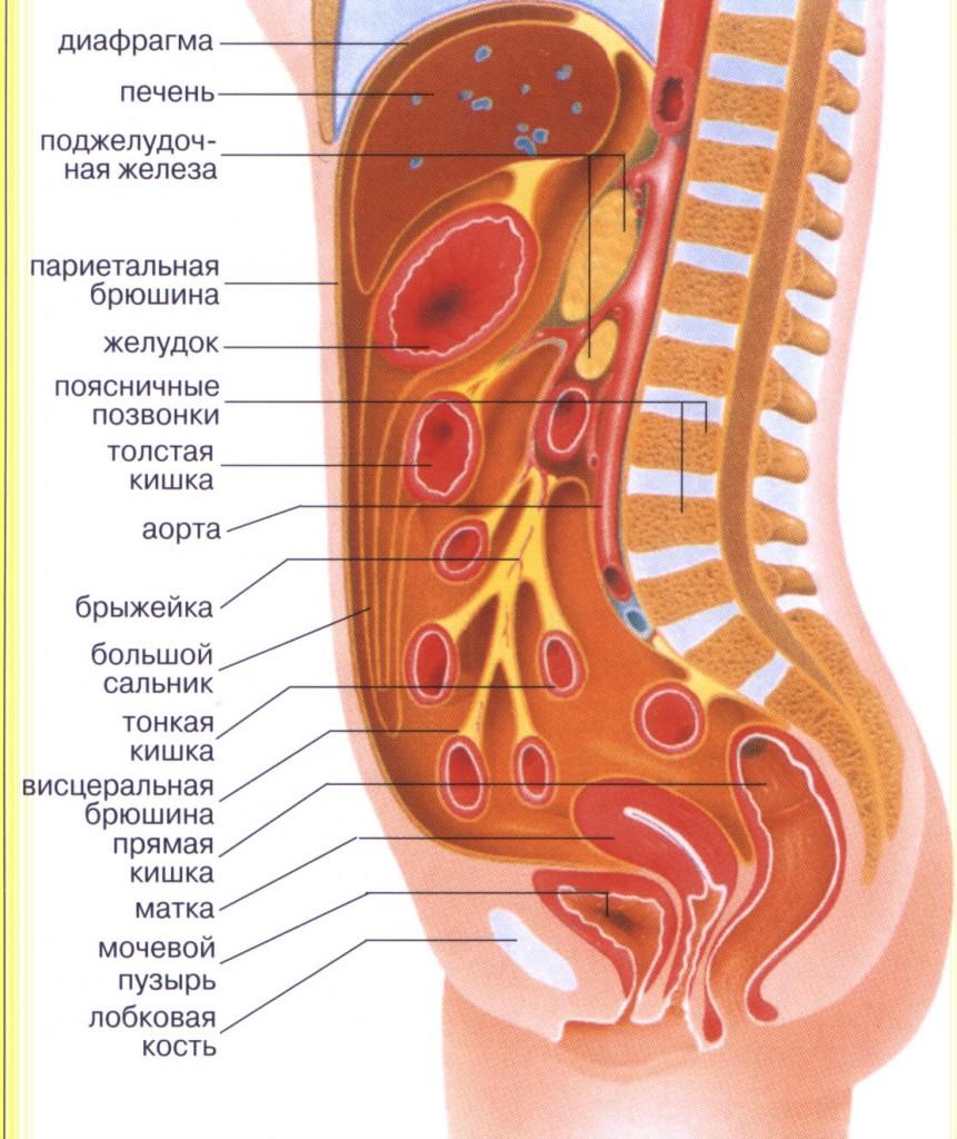 Перитонит – причины, симптомы, лечение