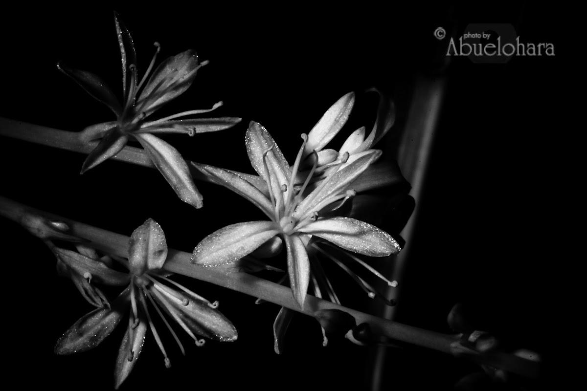 Las flores de Punitaqui-Pablo Neruda