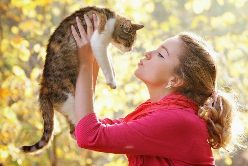 Mengelus Kucing, Memelihara Kucing