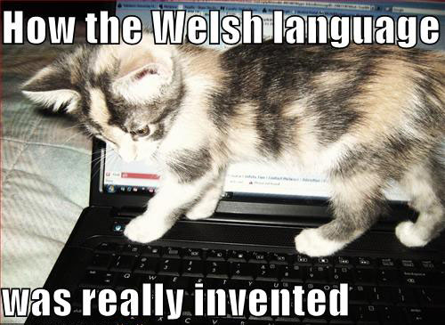 funny-pictures-kitten-invents-welsh-lang