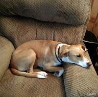 Yuma resting