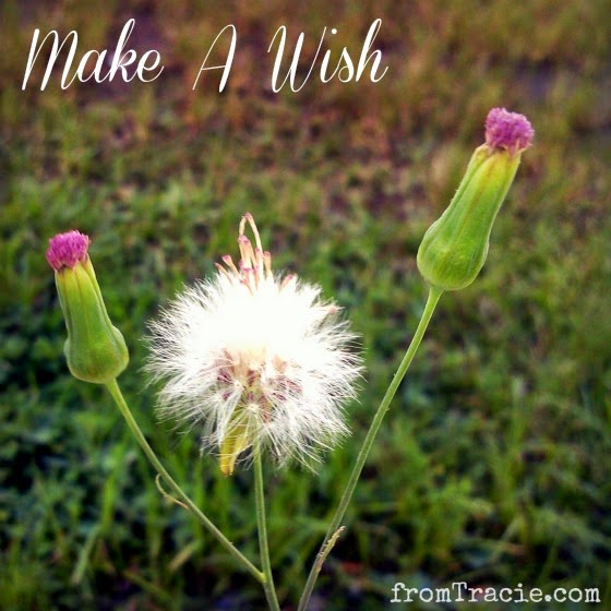 wishing dandelion