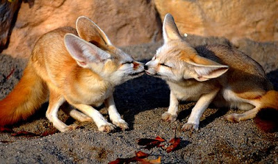 Animals kissing Pictures