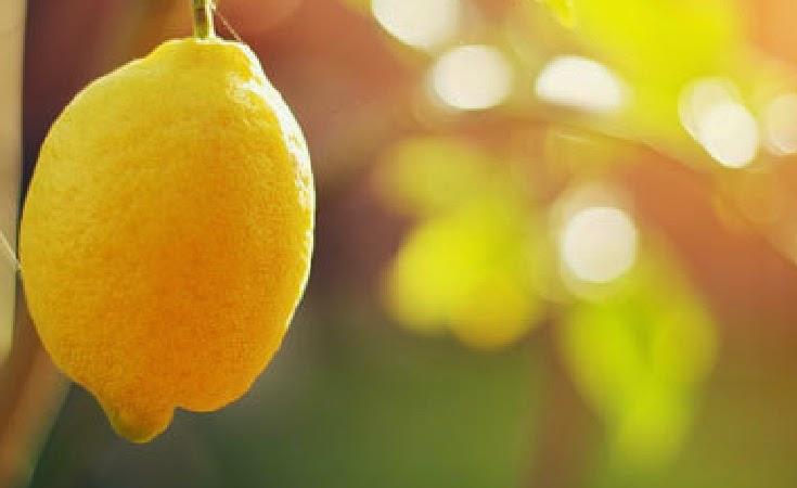 Makanan detoks yang mampu membersihkan racun dalam tubuh