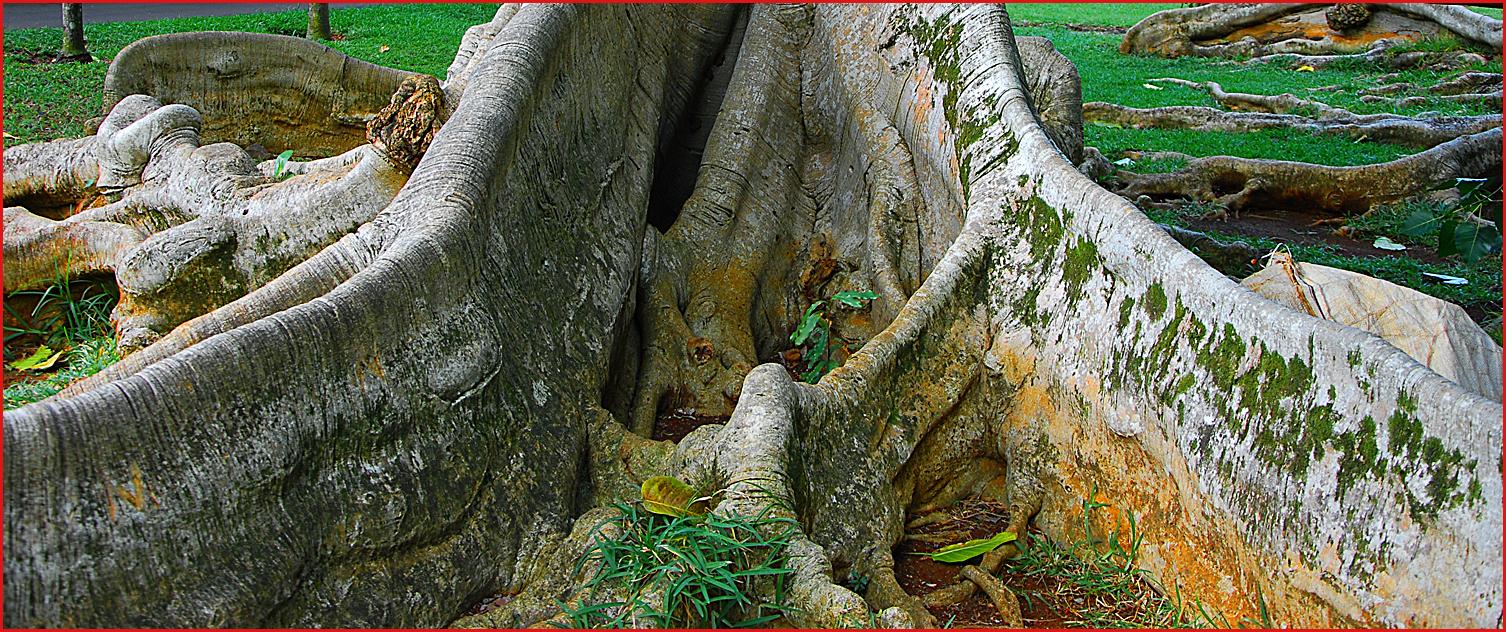 Alberi e dintorni ottobre 2012 for Nomi di alberi sempreverdi
