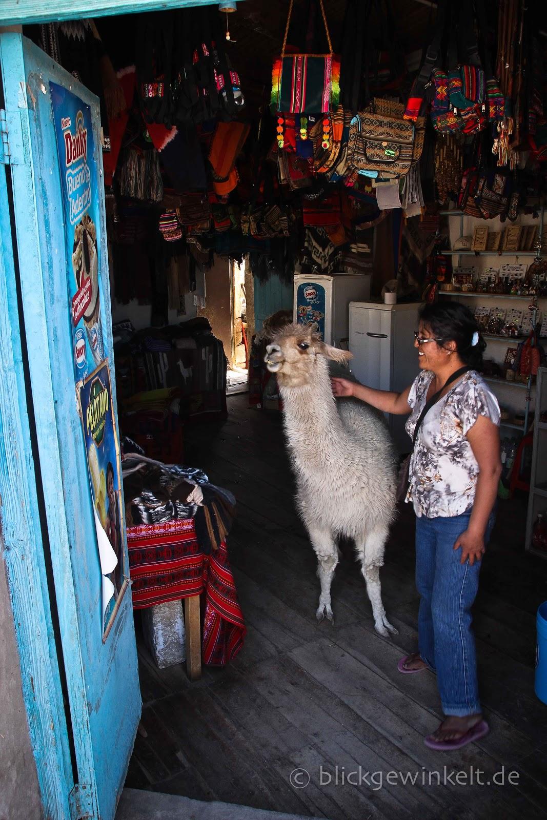 Das Lama im Laden