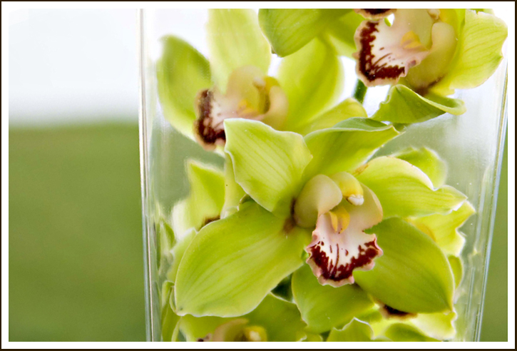 have always loved orchids especially in lime green pinkGreen Cymbidium Orchid