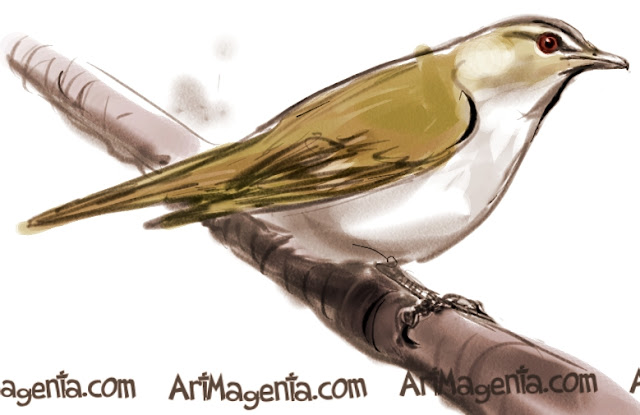Red-eyed Vireo sketch painting. Bird art drawing by illustrator Artmagenta