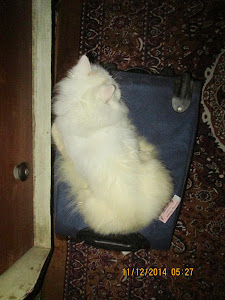 "Cat ""Matahari"" guarding my luggage !"