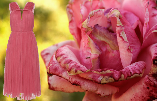 Larvin pleated dress and a rose of my garden