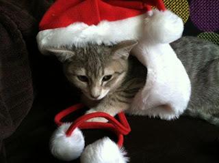 Kitten in Costume