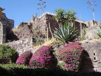 Voyage au Mexique Janvier-Février 2011