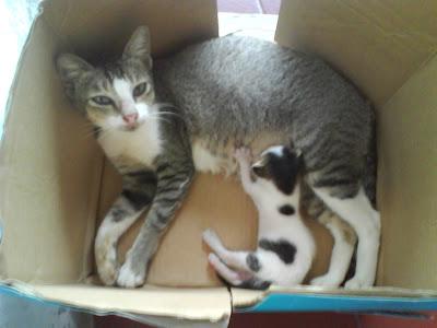kandang terbaik untuk kucing yang baru melahirkan