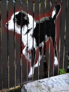 black picket dog
