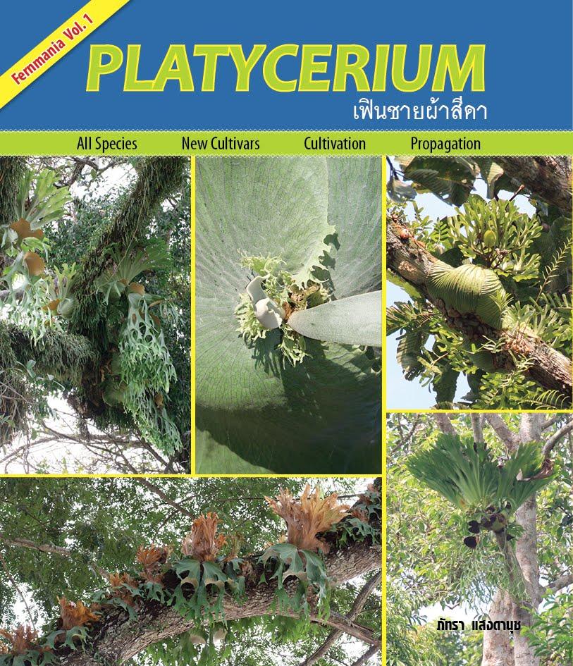 Platycerium เฟินชายผ้าสีดา
