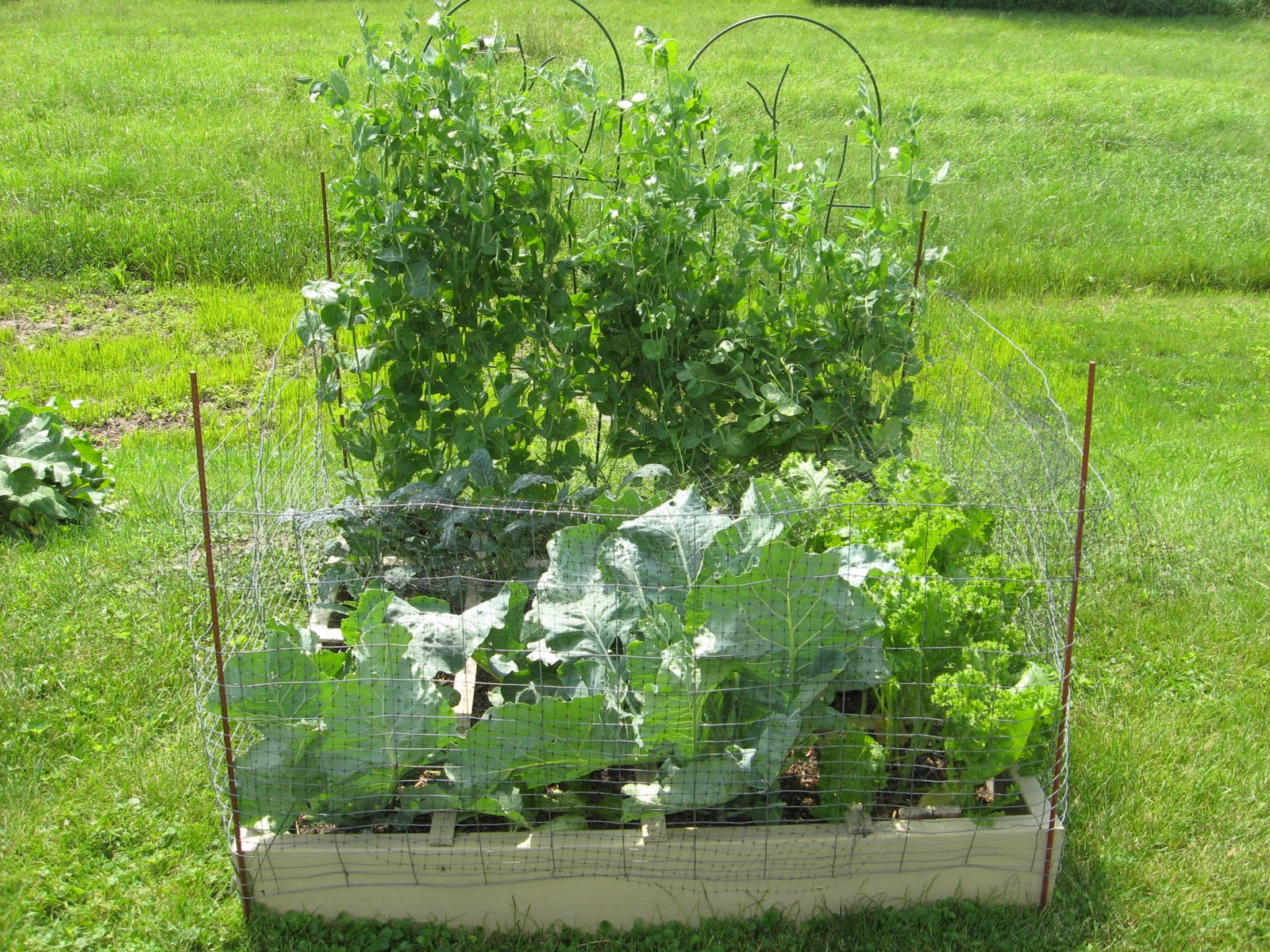 Journey To A More Simple And Greener Lifestyle Square Foot Gardening