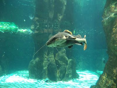 """El Acquario de Génova se encuentra localizado en el Puerto Antiguo de la ciudad, específicamente en el Muelle """"Spinola"""""""