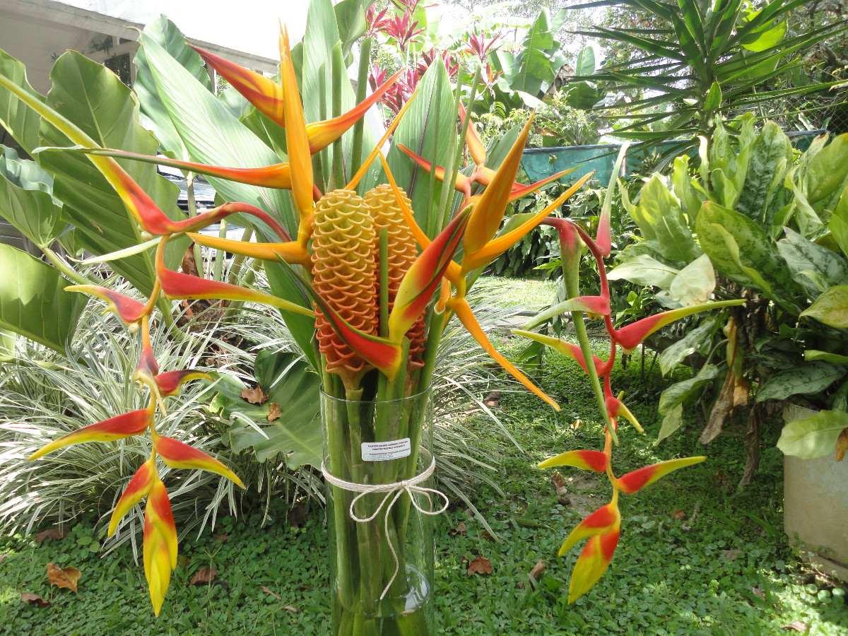 Fotos de flores exoticas fotografias y fotos para imprimir for Fotos de jardines