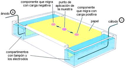 Electroforesis de zona sobre papel