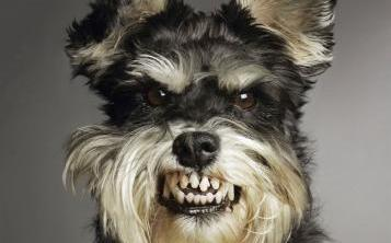 pet Por que o Comportamento Agressivo do Cão