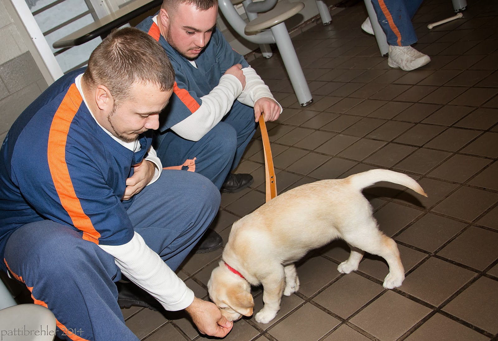 A small yellow Lab puppy is facing to the left, his head is sniffing a hand that is at the floor level. A young man with short dark hair is squatting to the left of the puppy, handing him a treat. He is dressed in the blue prison uniform with an oragan strip down his shoulder. Another young man, dressed the same, is squatting behind him. That man is holding a brown leather leash.