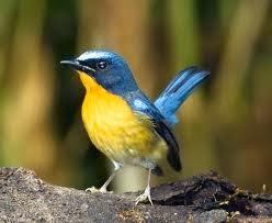 Jenis-Jenis Burung Yang Paling Di Cari Saat Ini Dan Kisaran Harganya