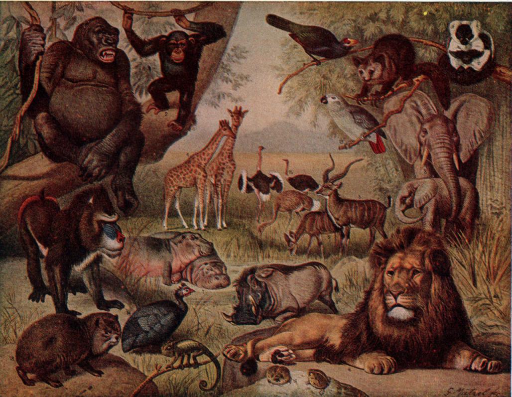 http://1.bp.blogspot.com/-Hoxr-ANdMAY/Tn9dHTOHYDI/AAAAAAAAAAo/CUx4oa-MxXY/s1600/african+animals+2.png