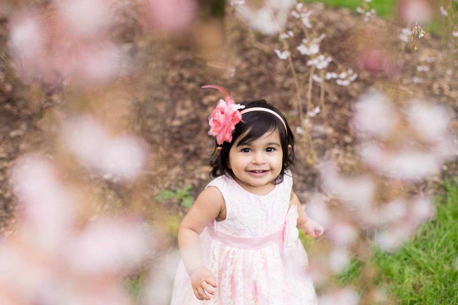 cherry blossoms, beautiful baby, baby pics, flowers and baby,  indian baby girl, baby girl, baby pictures, toddler pictures