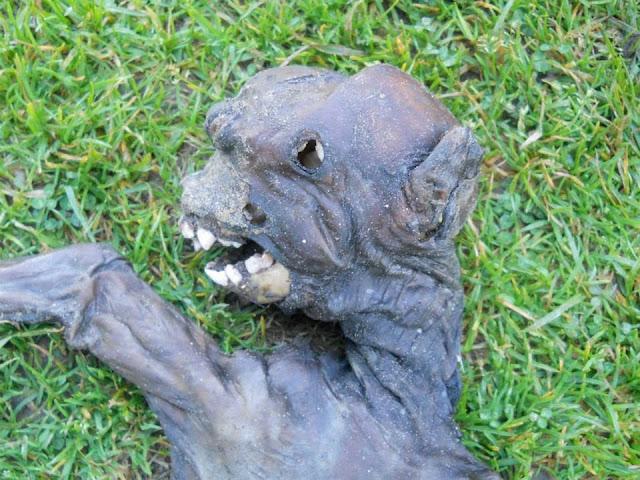 Extraña Criatura es Encontrada en Sudafrica Extrana-criatura-surafricana-0