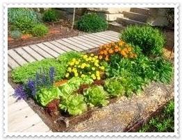 Huerto y maceto huerto ecol gico guia y planificaci n de for Asociacion cultivos huerto urbano